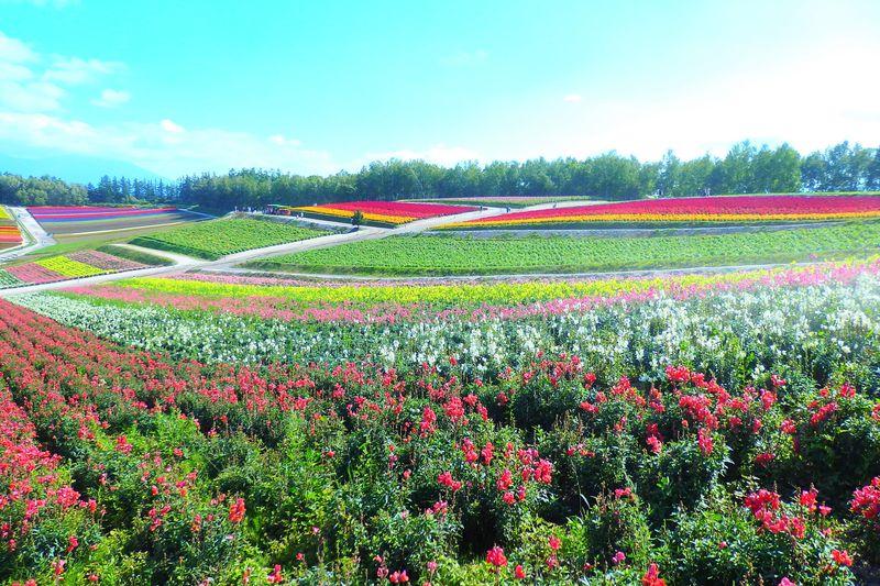 四季彩の丘・緑が綺麗で美しい花畑