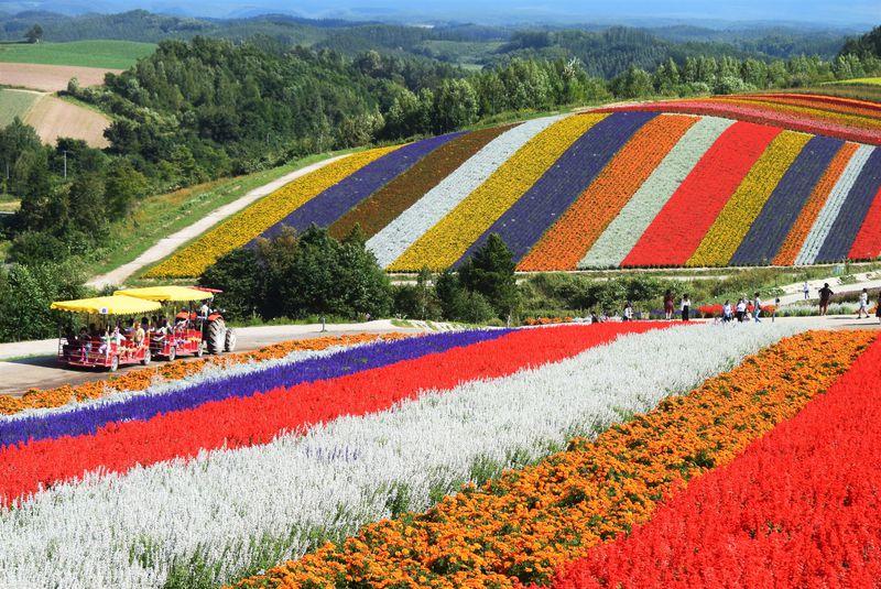 四季彩の丘の綺麗で美しい花畑