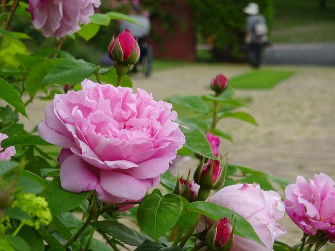 9:45:花咲く庭園!ゆにガーデンの花畑がフォトジェニック