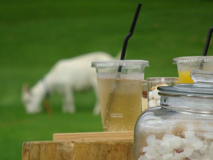 ピクニックで「星野リゾート トマム」の景色を堪能