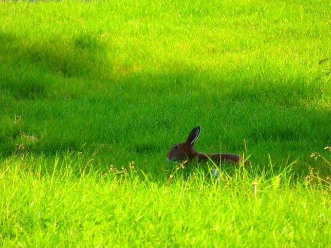 野生動物の痕跡を探す「サファリドライブ」も