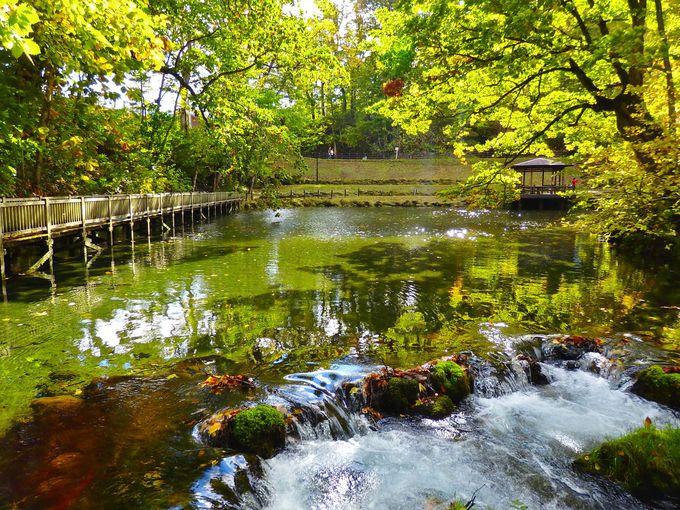 マイナスイオンたっぷり!「ふきだし公園」で名水の美を堪能