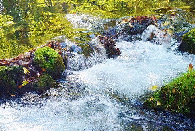 京極町「ふきだし公園」の名水と「水まんじゅう」が美味しい理由