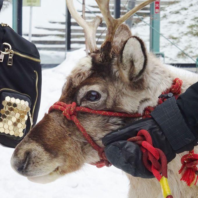 本物のトナカイや動物に会える!星野リゾート トマム「ファームクリスマス」