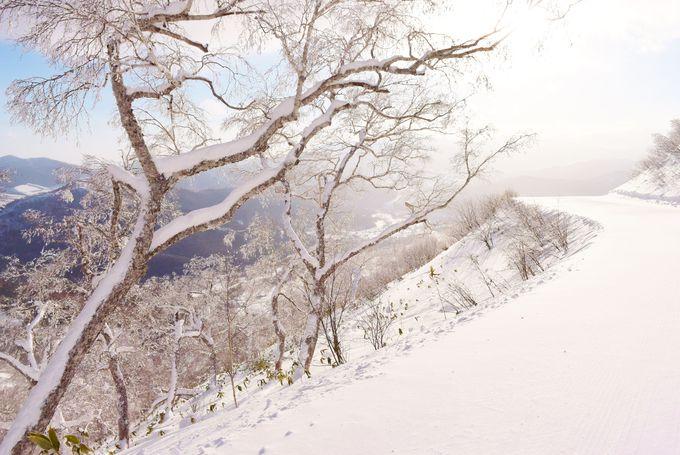 神秘的な冬の絶景を「霧氷テラス」で体験する