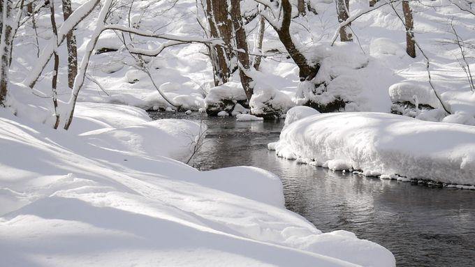 奥入瀬渓流ホテルで堪能!青森の冬絶景をアクティビティで