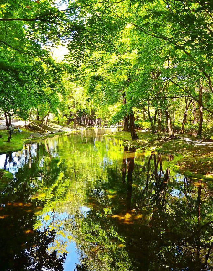 帯広「真鍋庭園」で緑に包まれた癒やしの森林浴を!