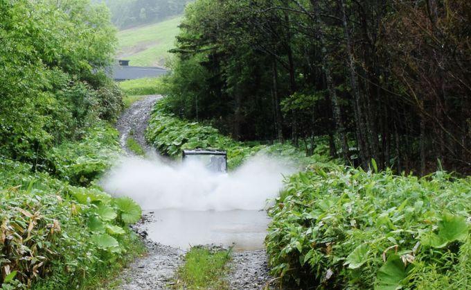 水たまりも池もへっちゃら!疾走するバギーの運転にもう夢中