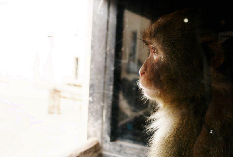 モフッと大迫力!大人も楽しい「旭山動物園」見どころガイド