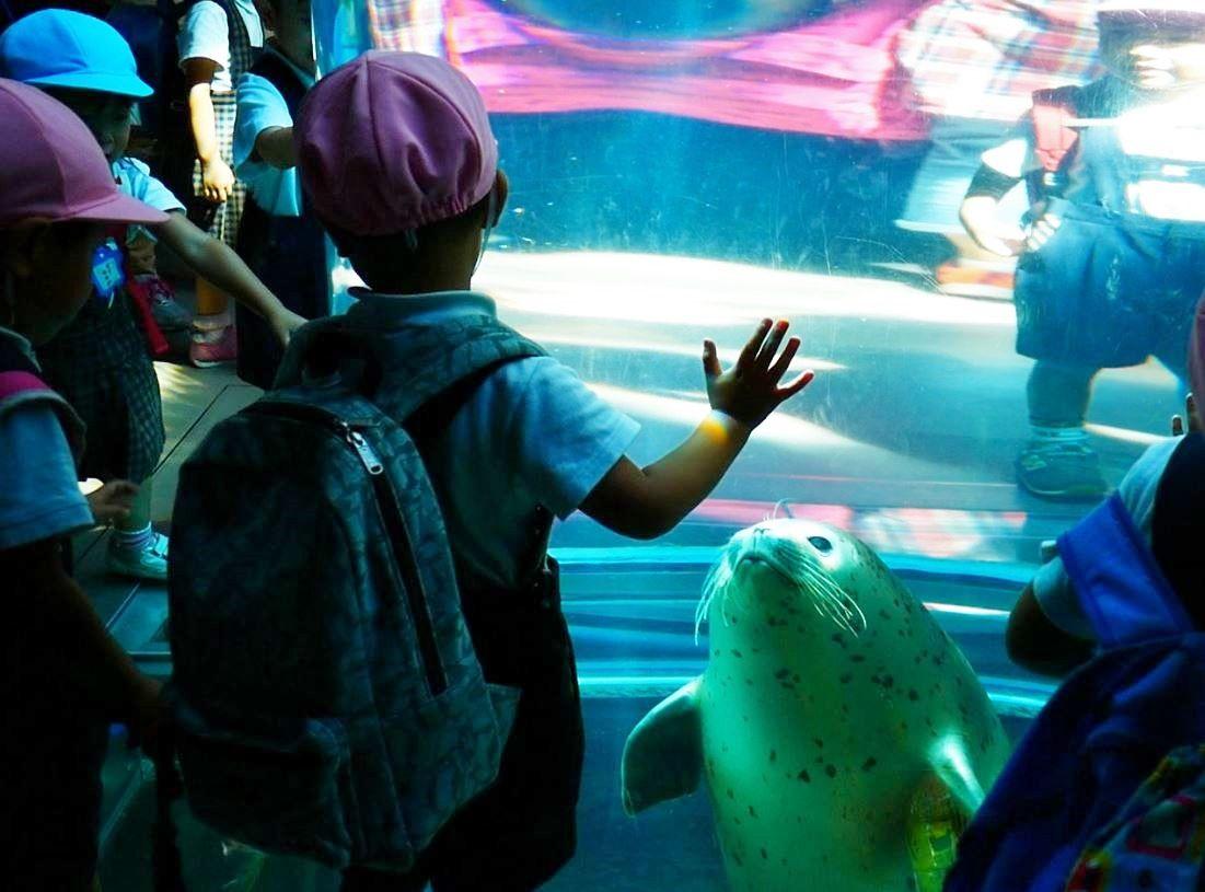 360度あざらし!旭山動物園「あざらし館」の見どころは?