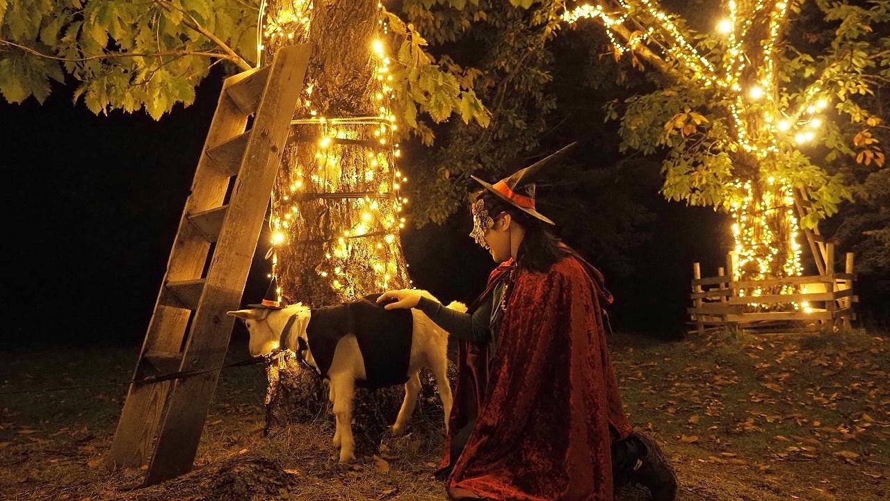 宿泊も日帰りも。秋の星野リゾート トマムのイベント