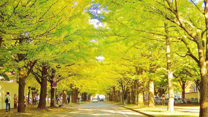 1時間で徒歩観光!北海道大学で必見のフォトスポット