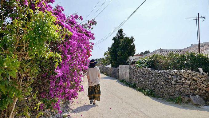 水牛車散歩で竹富島の名物観光を体験