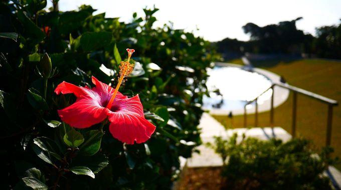 ガイドブックに載っていない竹富島の絶景を探して