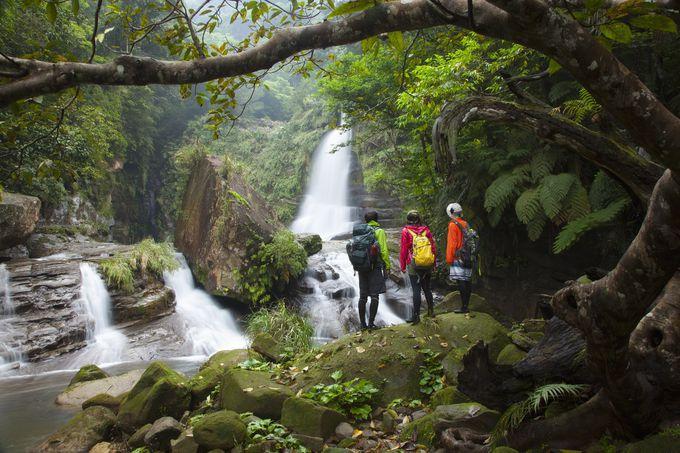 トレッキングでジャングルをとことん!秘境を楽しむ山歩き