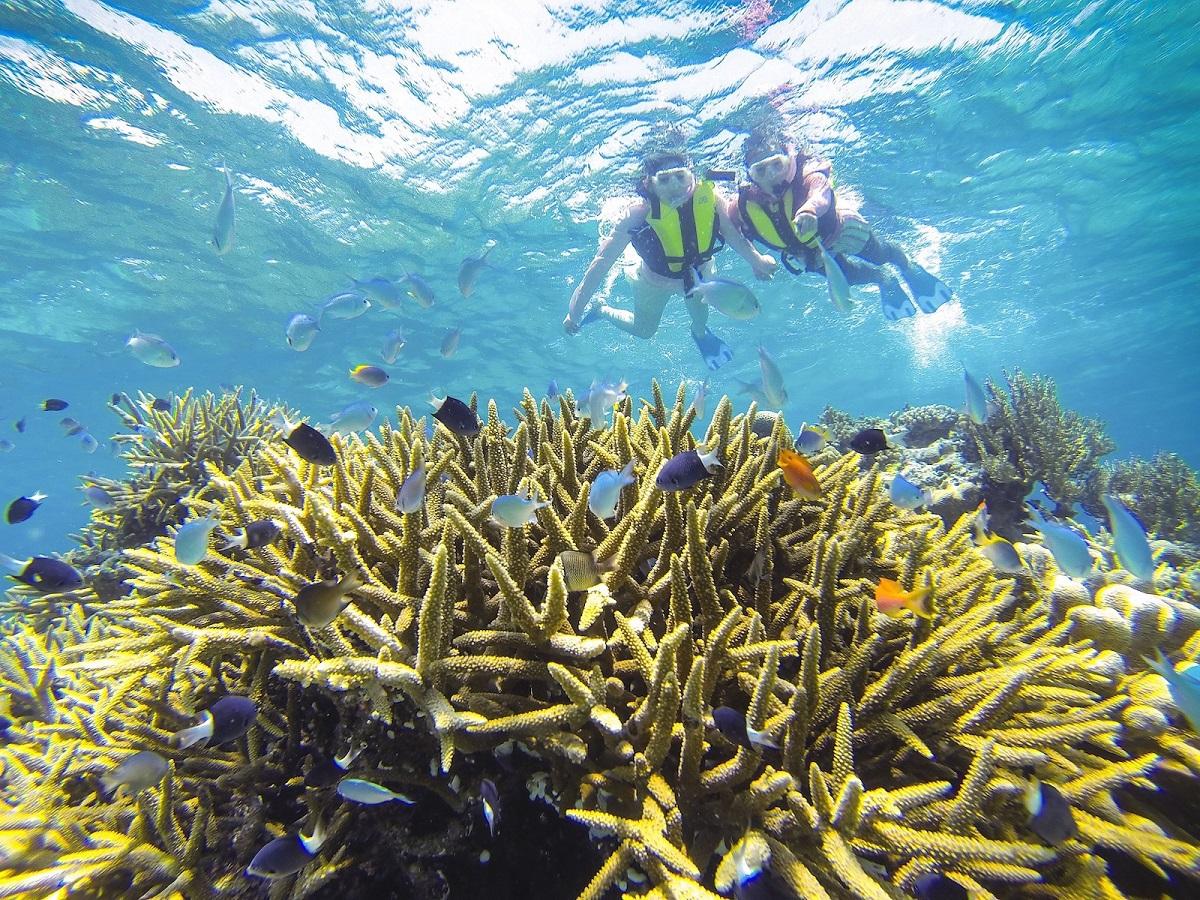 6.透明な海でシュノーケリングやダイビング