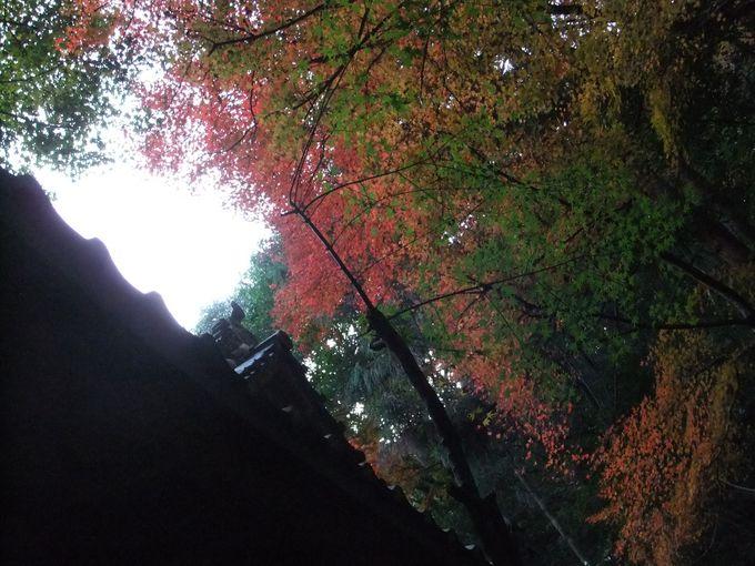 白馬渓(はくばけい)の遊歩道で紅葉樹を散策しよう