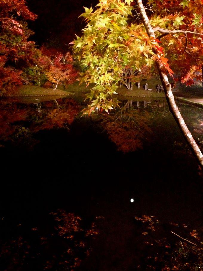 500本以上の紅葉樹!元別荘地の用作(ゆうじゃく)公園