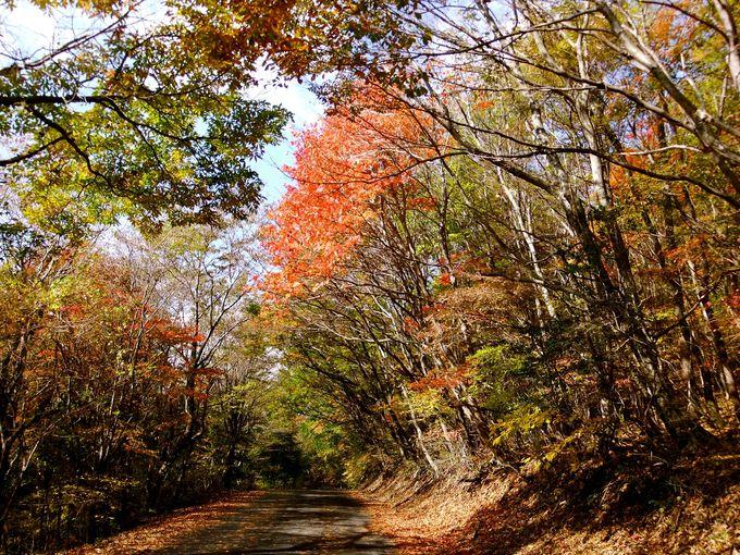 シーズンごとに山の色が変わる久住高原