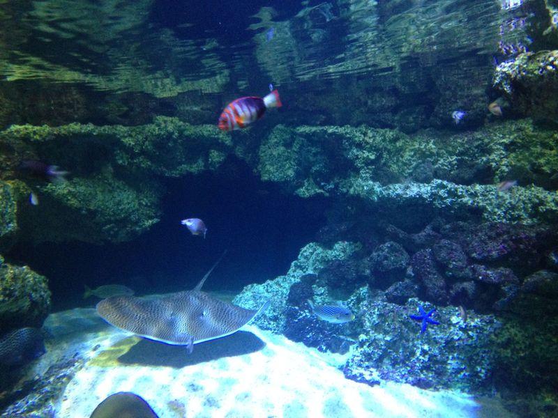 シドニー水族館はオセアニアの生き物の宝庫!周辺見所もたくさん