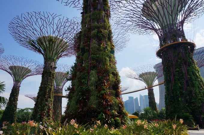圧巻!世界最大の柱のない温室は、度肝を抜かれる広さ!