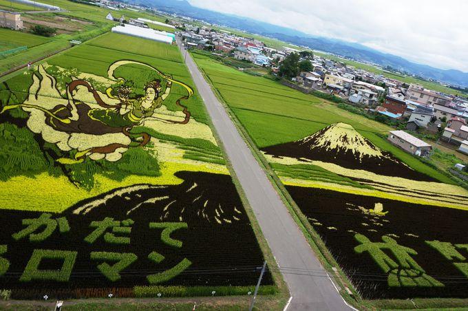 今では10種類の古代米を使い分け!年々複雑になる絵柄