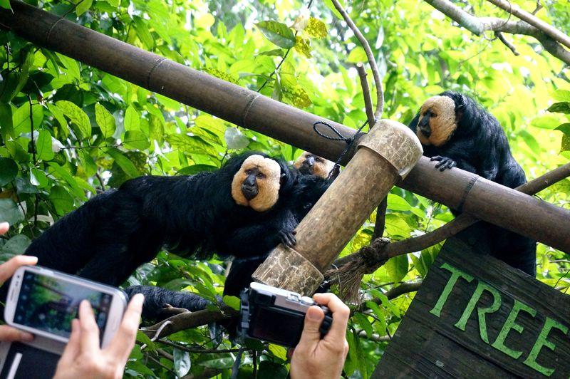 動物達と急接近!檻や柵のないシンガポールズーで未知なる体験!