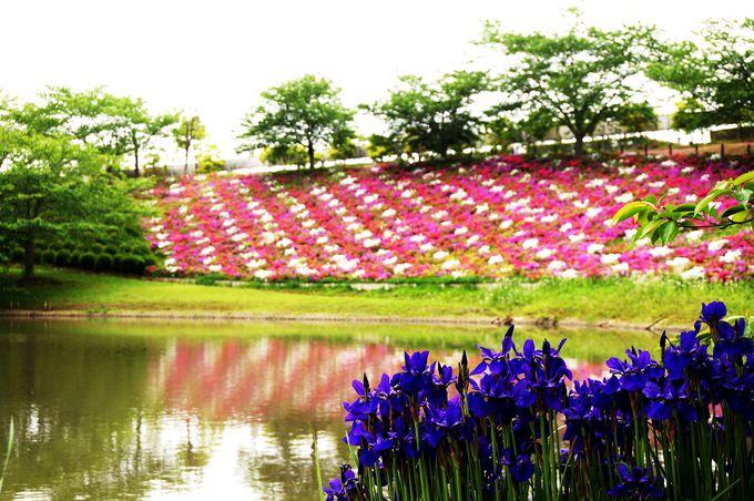 池や浄土庭園、滝など心を静めるスポットがまだまだあり!
