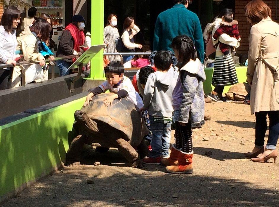 ゾウガメに乗れる!伊豆・体感型動物園「iZOO」が凄い!!