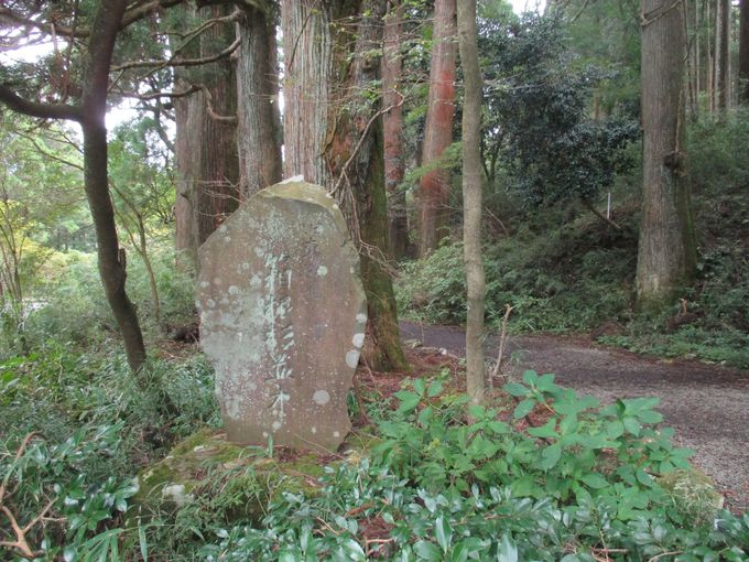 かつての関東への大動脈・旧東海道杉並木を歩く