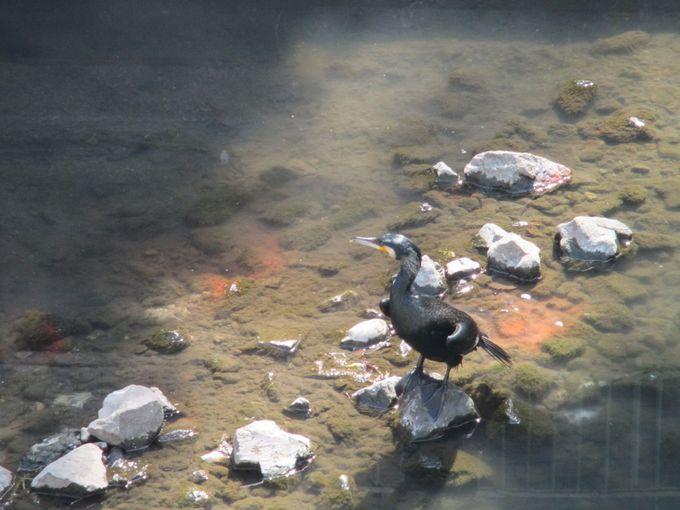 水のコンコンと湧く和田堀池へ