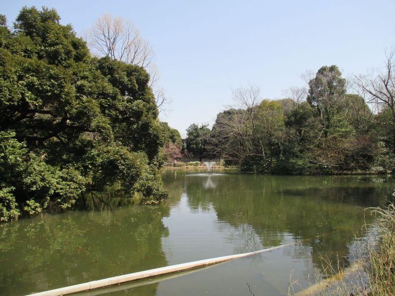 都心から30分!自然いっぱいの杉並区・善福寺川沿いでピクニック