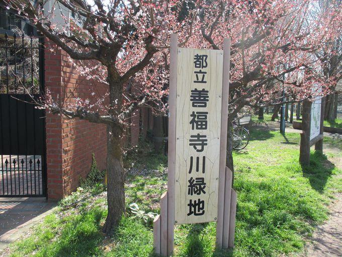 善福寺川沿いをゆっくり散歩