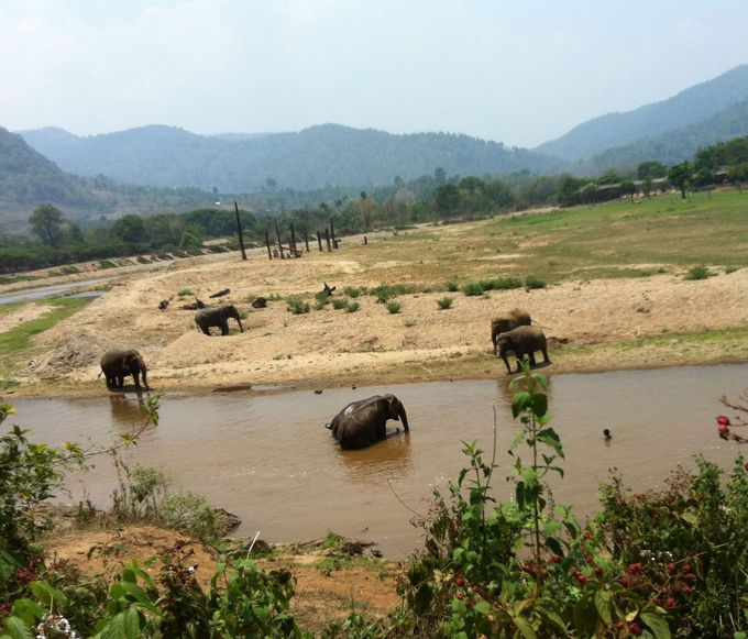 タイは象の国