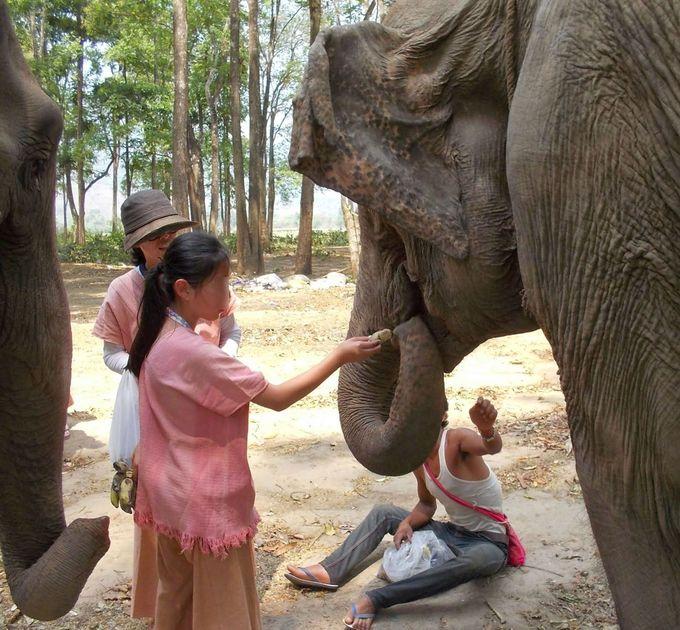 象使いとエコツーリズム