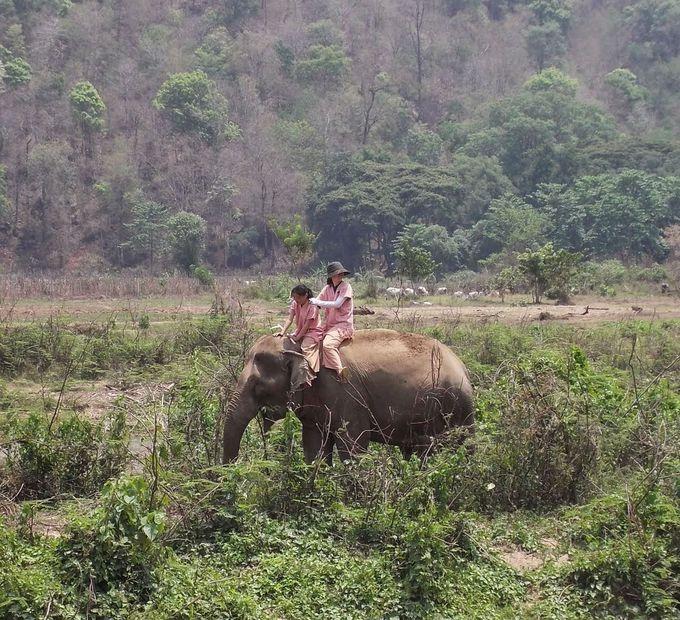 人間が象の生活に参加するという観光