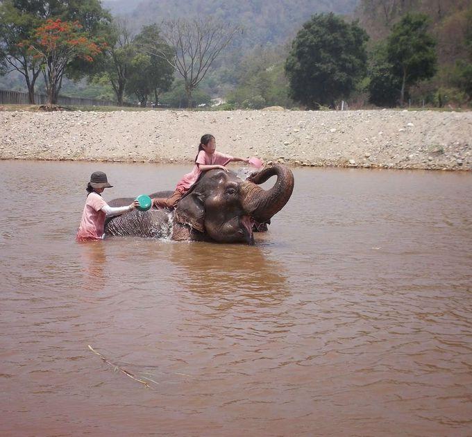 象使い体験に大緊張&大興奮