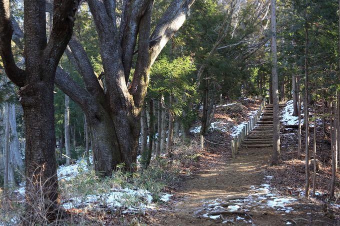 明王峠まで歩きやすい関東ふれあいの道で