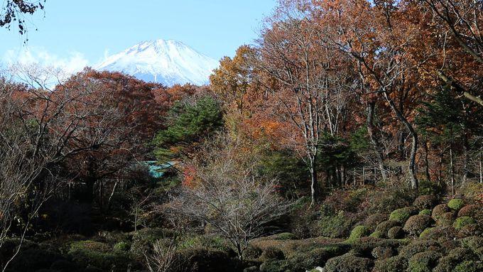 富士山の大噴火とともに出来上がった溶岩地帯の御胎内清宏園