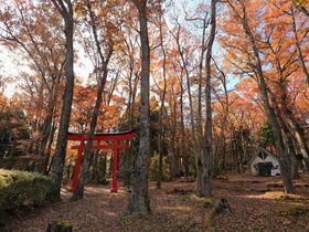大迫力富士山!静岡・御胎内清宏園で紅葉景観と溶岩洞窟探索