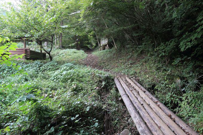 沢沿いの苔の森で川を渡って大自然を満喫
