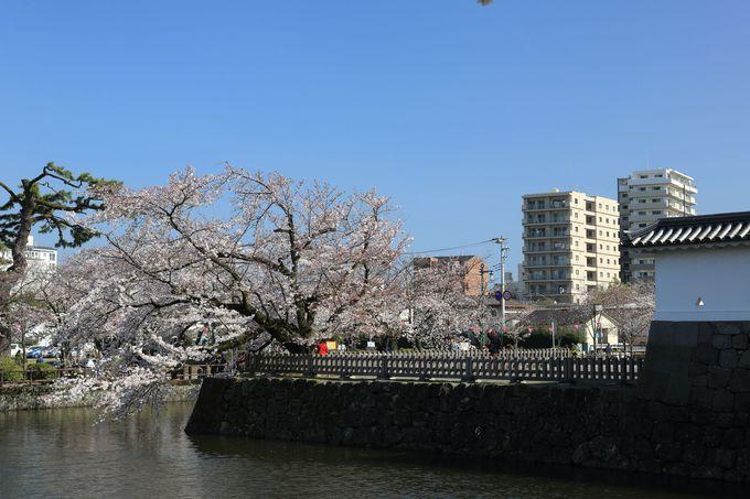 戦国時代最大級の城郭だった小田原城は、今や市民の憩いの場!
