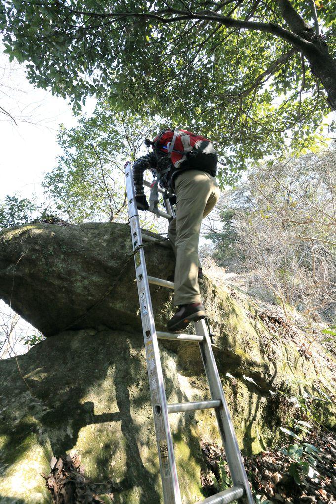 登山経験者ならウバメガシの群生稜線を行く奥沼津アルプスも!