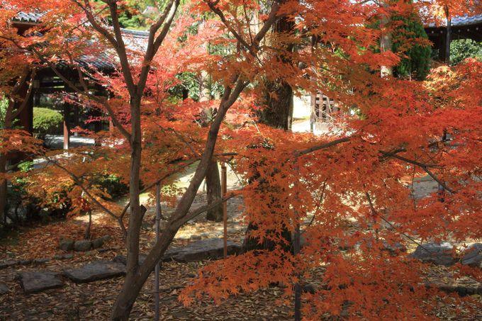 紅葉真っ盛りの京都をゆっくり回る贅沢
