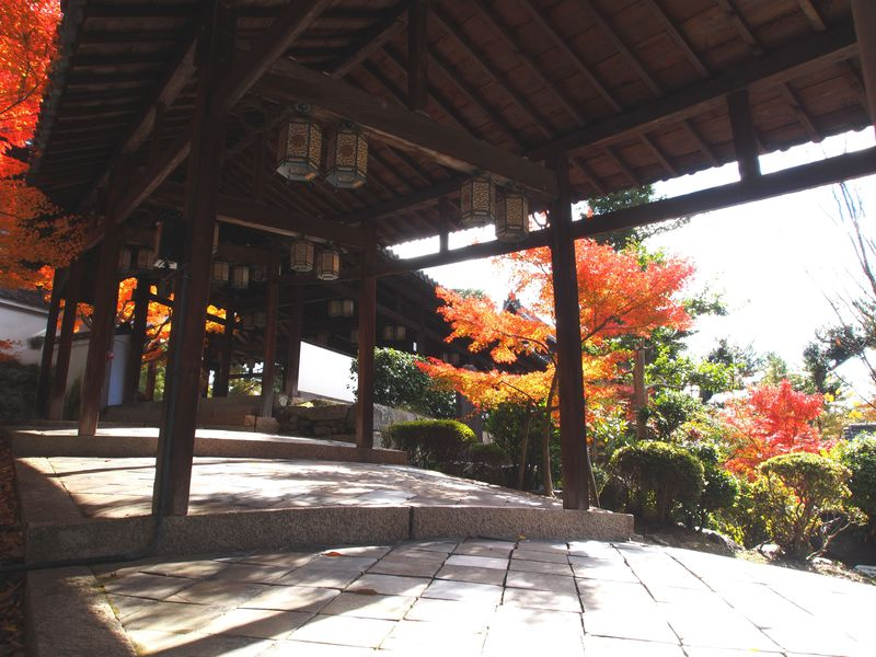 隠元禅師が開いた中国渡来の大寺院・京都・黄檗宗萬福寺で紅葉を堪能!