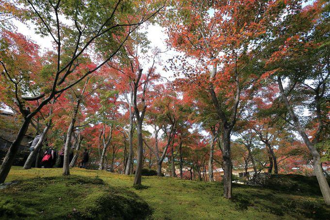 足を踏み込むと、そこには別世界!箱根美術館の庭園美
