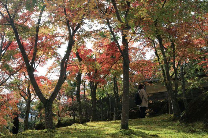 息を飲む紅葉の美しさ