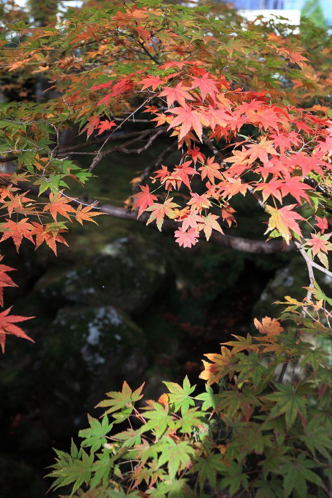 驚きの紅葉をその目で確認!自分なりの美しさを見つける楽しさ