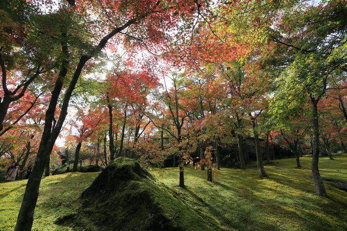息をのむ美しさ!「箱根美術館」と「強羅公園」で紅葉三昧(神奈川)