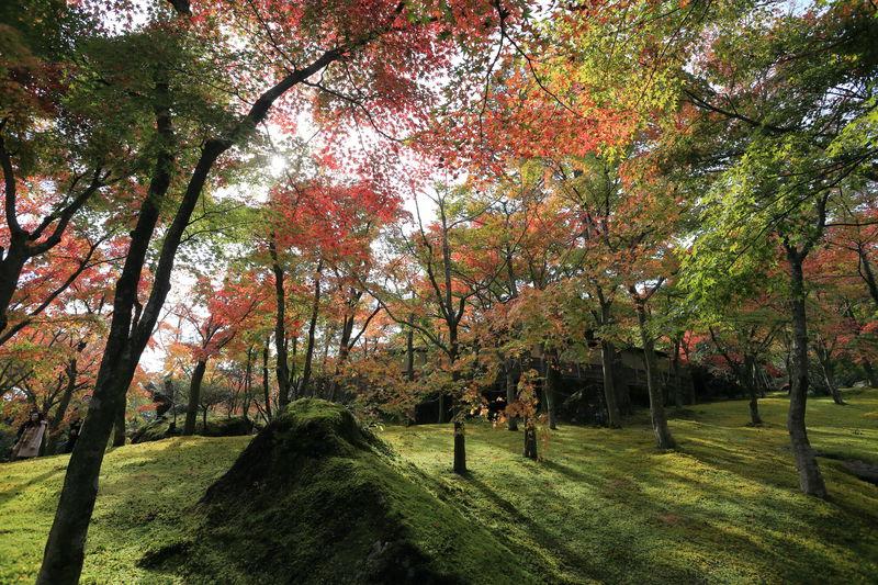 息を飲む紅葉美!「箱根美術館」はあなたを異次元に連れ出す